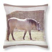 Buckskin Horse  Throw Pillow
