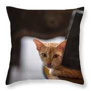 Buddhist Temple Cat Throw Pillow