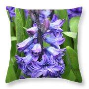 Budding And Flowering Purple Hyacinth Flower Throw Pillow