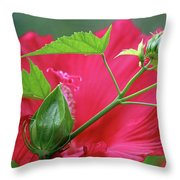 Buds Before Blooms Throw Pillow