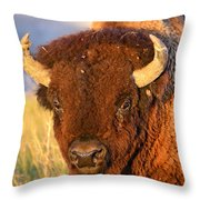 Buff In The Badlands Throw Pillow