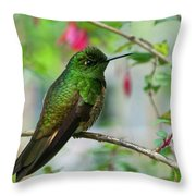 Buff-tailed Coronet Throw Pillow
