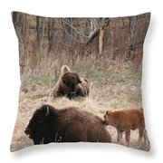 Buffalo And Calf Throw Pillow