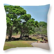 Buffalo At Hambantota Throw Pillow
