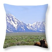 Buffalo At Rest Throw Pillow