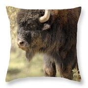 Buffalo Bull Throw Pillow