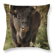 Buffalo Bull II Throw Pillow