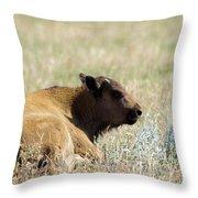 Buffalo Calf Throw Pillow