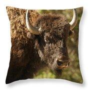 Buffalo Cow Throw Pillow