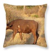 Buffalo Crossing Throw Pillow