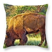 Buffalo Custer State Park  Throw Pillow