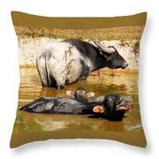 Water Buffalo Family Portrait Throw Pillow