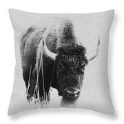 Buffalo Gal Throw Pillow