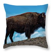 Buffalo In Profile Throw Pillow