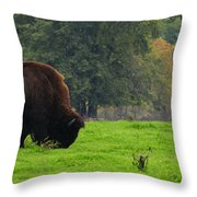 Buffalo In Spring Grass Throw Pillow