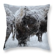 Buffalo In The Blowing Snow Throw Pillow