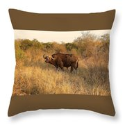 Buffalo On Safari Throw Pillow