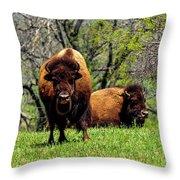 Buffalo Posing Throw Pillow