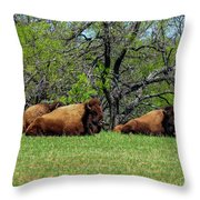 Buffalo Resting In A Field Throw Pillow