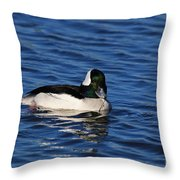 Buffle Head Throw Pillow
