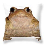 Bufo Bufo European Toad Isolated Throw Pillow