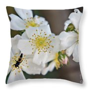 Bugaboo Apple Blossoms Throw Pillow