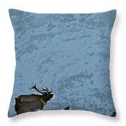 Bugling Bull Elk, Alberta Canada Throw Pillow