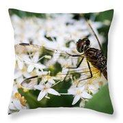 Bugs Throw Pillow