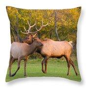 Bull And Cow Elk - Rutting Season Throw Pillow