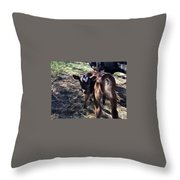 Bull Calf Throw Pillow
