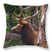 Bull Elk 2 Throw Pillow