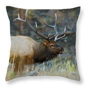 Bull Elk 6x6 Throw Pillow