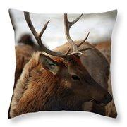 Bull Elk At Hardware Ranch 2 Throw Pillow