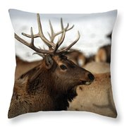 Bull Elk At Hardware Ranch Throw Pillow