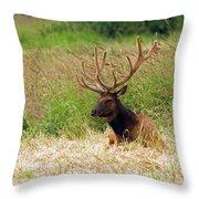 Bull Elk At Rest Throw Pillow
