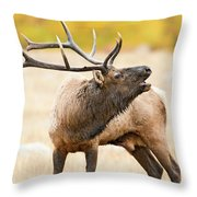 Bull Elk Bugling In The Fall Throw Pillow
