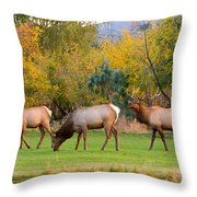 Bull Elk  Bugling With Cow Elks - Rutting Season Throw Pillow