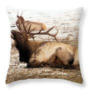Bull Elk Calls Out Throw Pillow