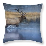 Bull Elk Crossing The Madison River Throw Pillow