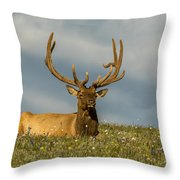 Bull Elk Friends For Now Throw Pillow