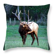 Bull Elk II Throw Pillow