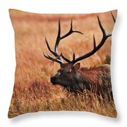 Bull Elk In A Field Throw Pillow