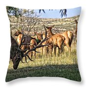 Bull Elk In Point Throw Pillow