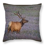 Bull Elk In Velvet Throw Pillow