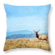 Bull Elk Meadow Throw Pillow