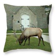 Bull Elk On The Church Lawn Throw Pillow