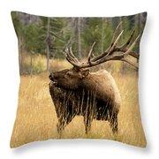 Bull Elk Sideview Throw Pillow