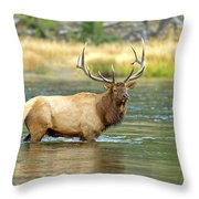 Bull Elk Wading The Madison River Throw Pillow