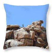 Bull From Joshua Tree Throw Pillow