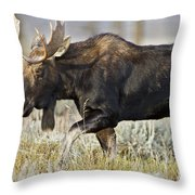 Bull Moose Crossing The Sage  Throw Pillow